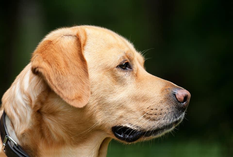 Köpek Eğitimi Nasıl Yapılır